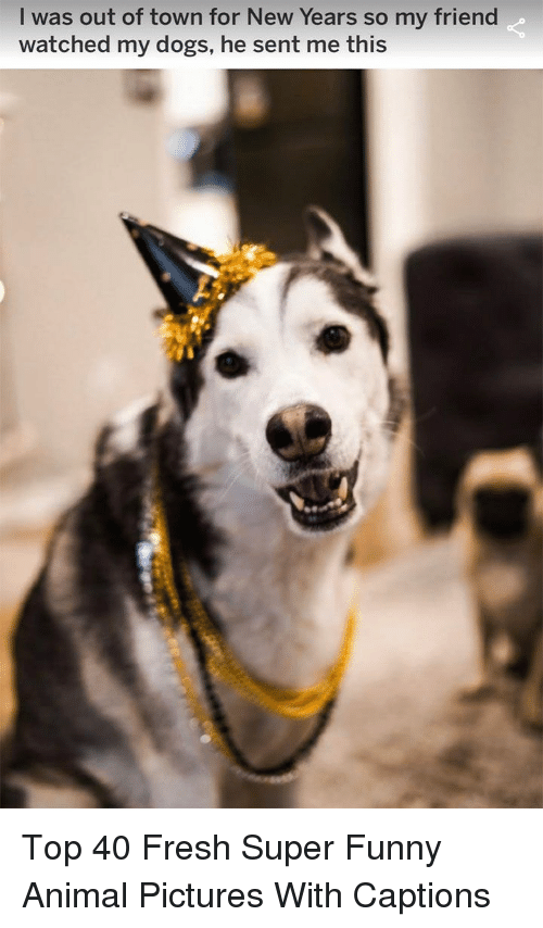 Dogs, Fresh, and Funny: I was out of town for New Years so my friend  watched my dogs, he sent me this Top 40 Fresh Super Funny Animal Pictures With Captions
