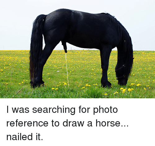 I Was Searching For Photo Reference To Draw A Horse Nailed It