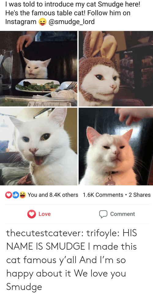 Instagram, Love, and Tumblr: I was told to introduce my cat Smudge here!  He's the famous table cat! Follow him on  @smudge_lord  Instagram  D  You and 8.4K others 1.6K Comments 2 Shares  Love  Comment thecutestcatever: trifoyle:  HIS NAME IS SMUDGE  I made this cat famous y'all And I'm so happy about it  We love you Smudge