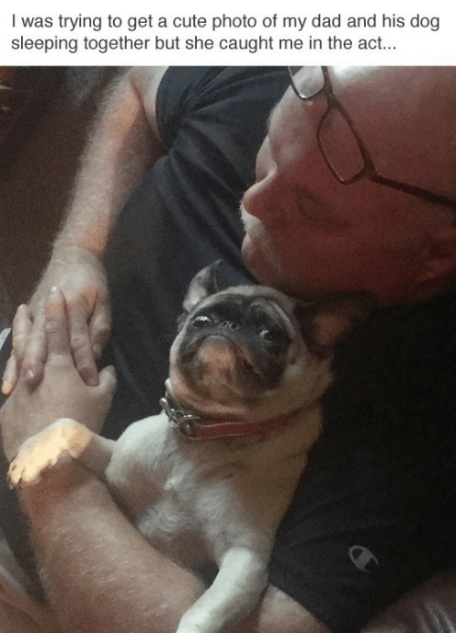 Cute, Dad, and Sleeping: I was trying to get a cute photo of my dad and his dog  sleeping together but she caught me in the act