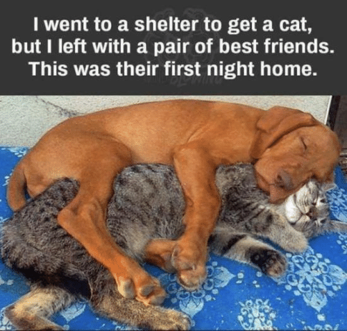 Dank, Friends, and Best: I went to a shelter to get a cat,  but I left with a pair of best friends.  This was their first night home.
