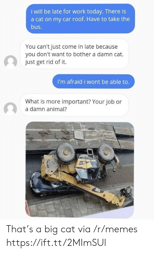 Memes, Work, and Animal: i will be late for work today. There is  a cat on my car roof. Have to take the  bus.  You can't just come in late because  you don't want to bother a damn cat.  just get rid of it.  I'm afraid i wont be able to.  What is more important? Your job or  a damn animal?  CAT That's a big cat via /r/memes https://ift.tt/2MImSUl