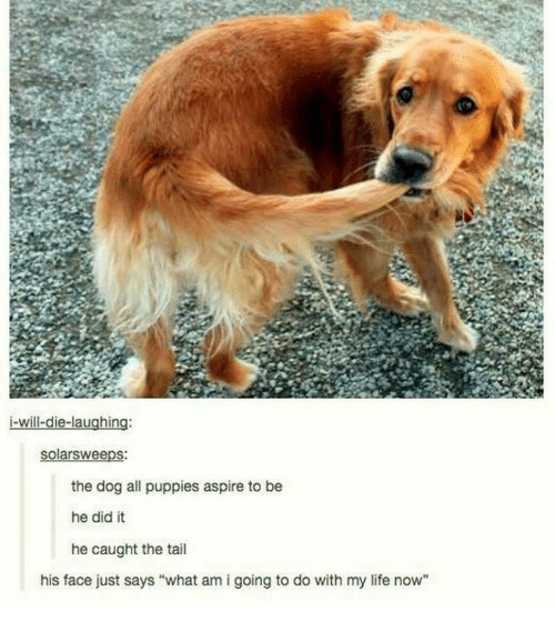 "Life, Puppies, and Dog: i-will-die-laughing:  the dog all puppies aspire to be  he did it  he caught the tail  his face just says ""what am i going to do with my life now"