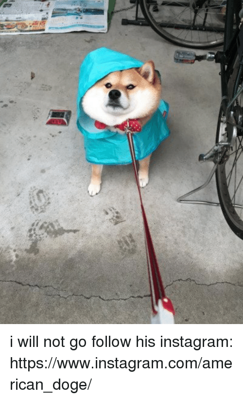 doges: i will not go follow his instagram: https://www.instagram.com/american_doge/