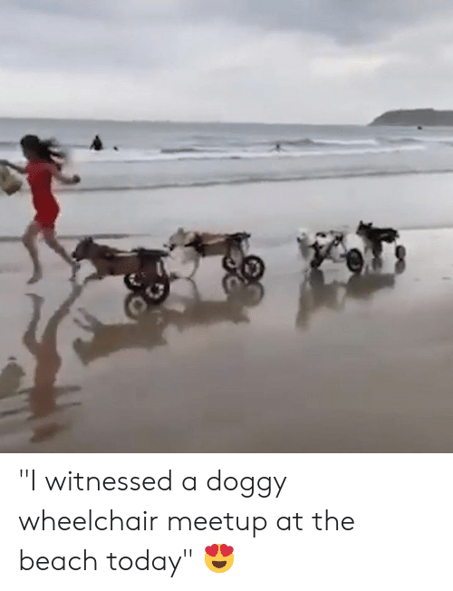 "doggy: ""I witnessed a doggy wheelchair meetup at the beach today"" 😍"