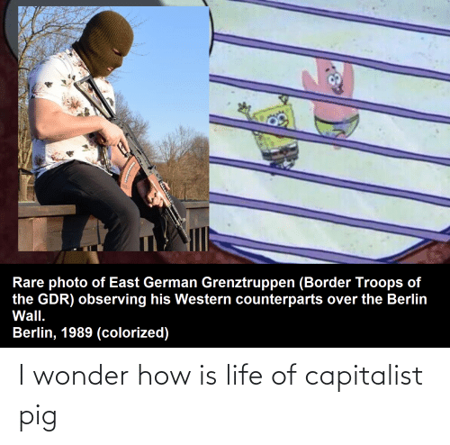 Is Life: I wonder how is life of capitalist pig
