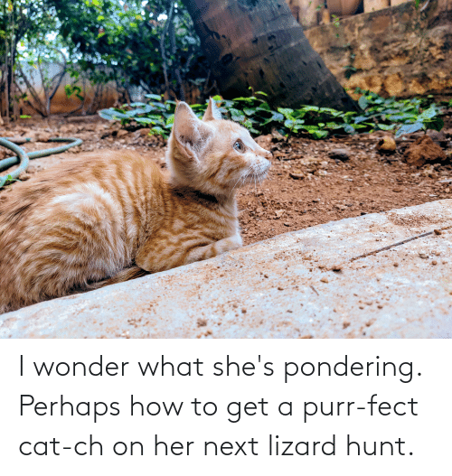 How To Get: I wonder what she's pondering. Perhaps how to get a purr-fect cat-ch on her next lizard hunt.
