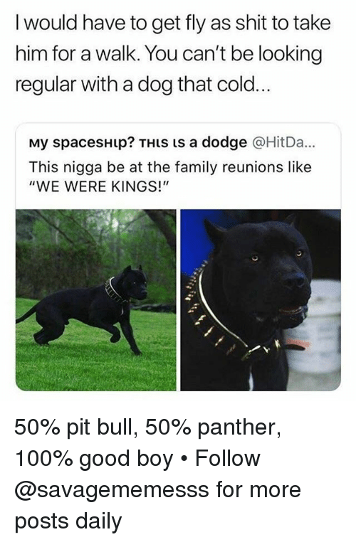 """Anaconda, Family, and Memes: I would have to get fly as shit to take  him for a walk. You can't be looking  regular with a dog that cold..  My spacesHip? THiS is a dodge @HitDa...  This nigga be at the family reunions like  """"WE WERE KINGS!"""" 50% pit bull, 50% panther, 100% good boy • Follow @savagememesss for more posts daily"""