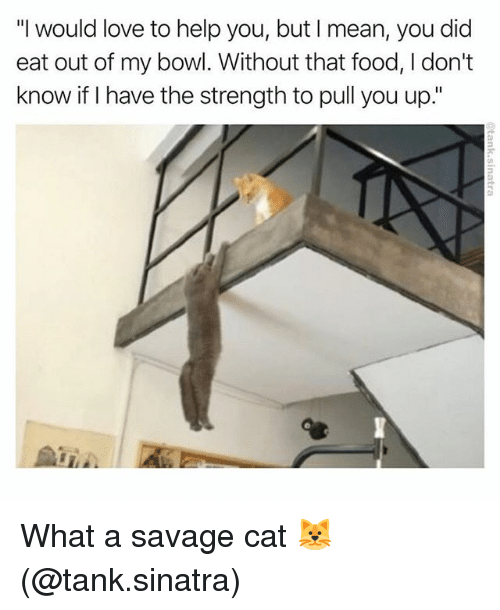 """tanked: """"I would love to help you, but I mean, you did  eat out of my bowl. Without that food, I don't  know if I have the strength to pull you up."""" What a savage cat 🐱 (@tank.sinatra)"""
