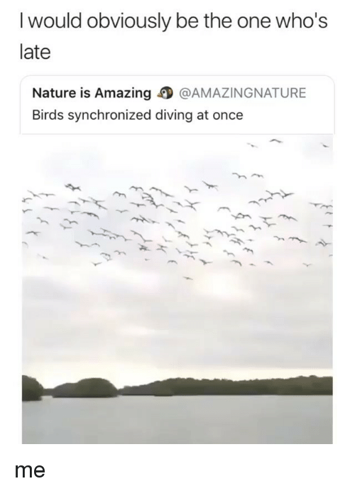 Ironic, Birds, and Nature: I would obviously be the one who's  late  Nature is Amazing @AMAZINGNATURE  Birds synchronized diving at once me