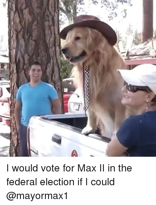 Memes, 🤖, and Election: I would vote for Max II in the federal election if I could @mayormax1