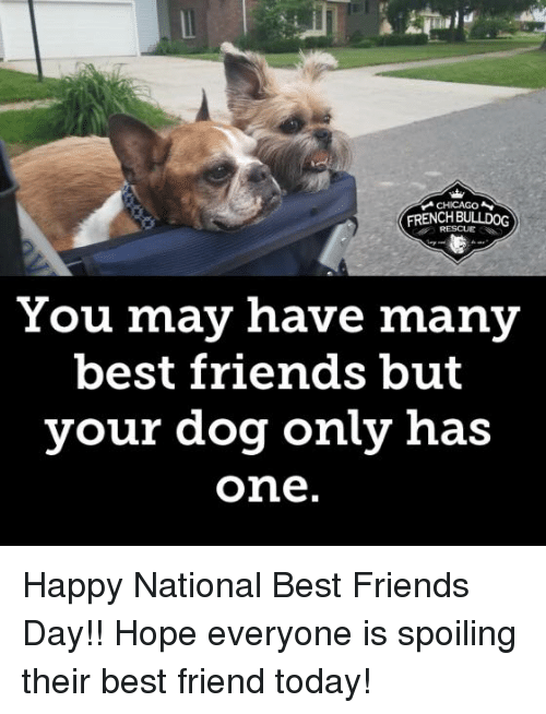 best friends day: ialt  CHICAGO  FRENCHEULLDOG  RESCUE  You may have many  best friends but  your dog only has  one Happy National Best Friends Day!! Hope everyone is spoiling their best friend today!