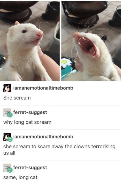 Clowns: iamanemotionaltimebomb  She scream  ferret-suggest  why long cat scream  iamanemotionaltimebomb  she scream to scare away the clowns terrorising  us all  ferret-suggest  same, long cat
