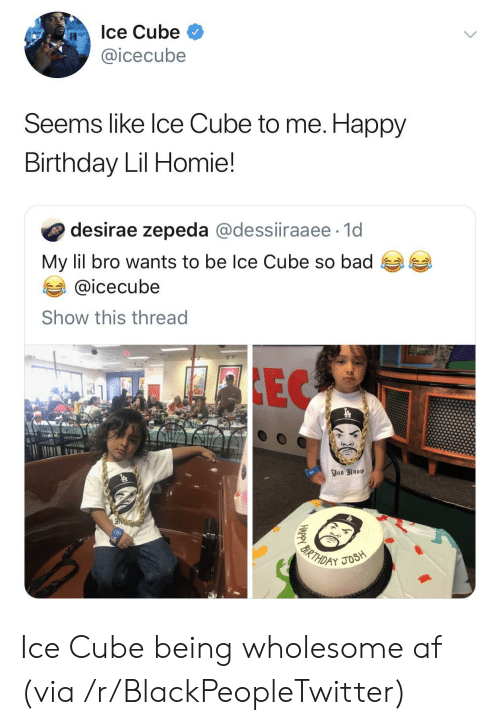 Ice Cube: Ice Cube  @icecube  Seems like Ice Cube to me. Happy  Birthday Lil Homie!  desirae zepeda @dessiiraaee 1d  My lil bro wants to be Ice Cube so bad  @icecube  Show this thread  FIEC  You Know  3  BIRTHDAY  JOSH  HAPPY Ice Cube being wholesome af (via /r/BlackPeopleTwitter)