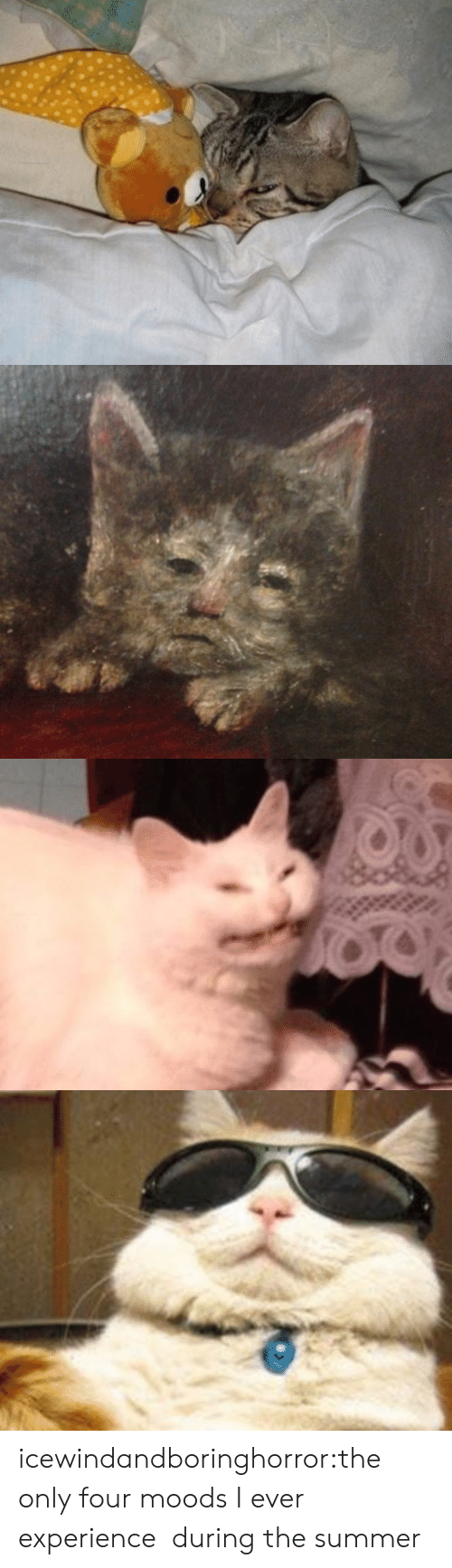 Tumblr, Summer, and Blog: icewindandboringhorror:the only four moods I ever experience during the summer