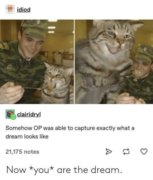 A Dream, The Dream, and Dream: idiod  clairidryl  Somehow OP was able to capture exactly what a  dream looks like  >  21,175 notes Now *you* are the dream.