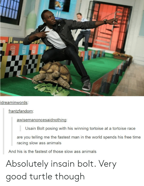 Animals, Ass, and Usain Bolt: idreaminwords:  frantzfandom  awisemanoncesaidnothing:  Usain Bolt posing with his winning tortoise at a tortoise race  are you telling me the fastest man in the world spends his free time  racing slow ass animals  And his is the fastest of those slow ass animals Absolutely insain bolt. Very good turtle though