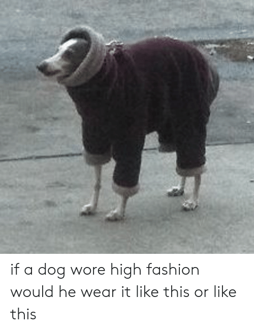 high fashion: if a dog wore high fashion would he wear it like this or like this