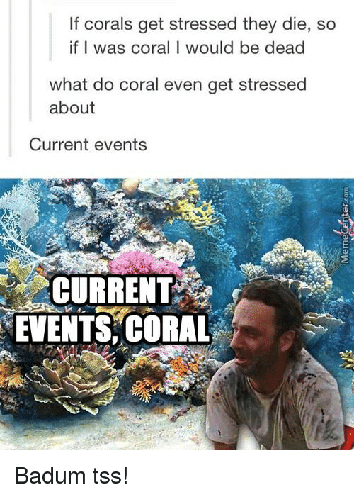 Badum: If corals get stressed they die, so  if I was coral I would be dead  what do coral even get stressed  about  Current events  CURRENT  EVENTS, CORAL Badum tss!