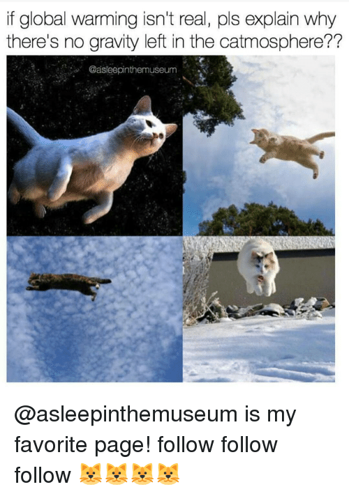 follow-follow-follow: if global warming isn't real, pls explain why  there's no gravity left in the catmosphere??  Casleepinthemuseum @asleepinthemuseum is my favorite page! follow follow follow 🐱🐱🐱🐱
