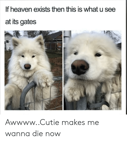 Awwww: If heaven exists then this is what u see  at its gates Awwww..Cutie makes me wanna die now