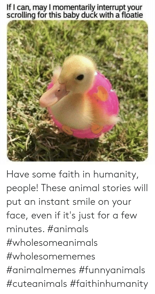 Animals, Animal, and Duck: If I can, may I momentarily interrupt your  scrolling for this baby duck with a floatie Have some faith in humanity, people! These animal stories will put an instant smile on your face, even if it's just for a few minutes. #animals #wholesomeanimals #wholesomememes #animalmemes #funnyanimals #cuteanimals #faithinhumanity