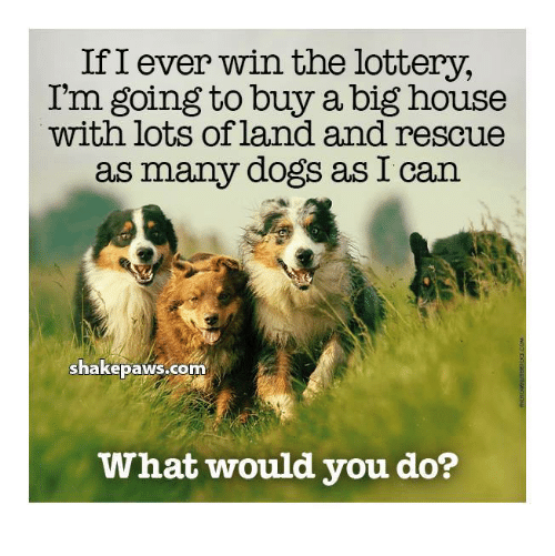 Dogs, Lottery, and Memes: If I ever win the lottery,  I'm going to buy a big house  with lots of land and rescue  as many dogs as I can  shakepaws.com  What would you do?
