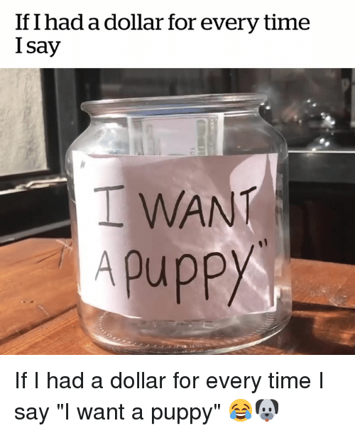 """Puppy, Time, and For: If I had a dollar for every time  I say  I WANT  Apuppy If I had a dollar for every time I say """"I want a puppy"""" 😂🐶"""