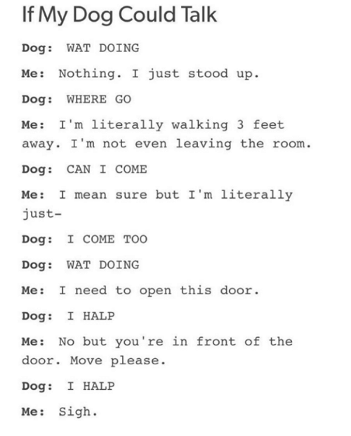 i m not: If My Dog Could Talk  Dog: WAT DOING  Me: Nothing. I just stood up.  Dog: WHERE GO  Me: I'm literally walking 3 feet  away. I 'm not even leaving the room.  Dog: CAN I COME  Me: I mean sure but I'm literally  just-  Dog: I COME TOO  Dog: WAT DOING  Me: I need to open this door  Dog: I HALP  Me: No but you're in front of the  door. Move please.  Dog: I HALP  Me: Sigh.