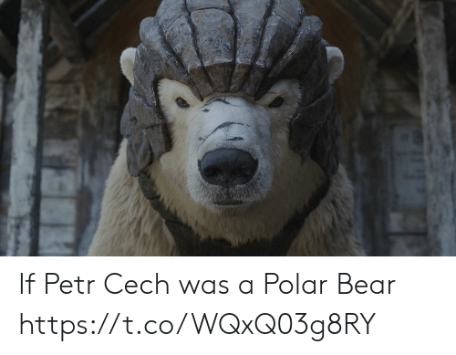 Memes, Bear, and 🤖: If Petr Cech was a Polar Bear https://t.co/WQxQ03g8RY