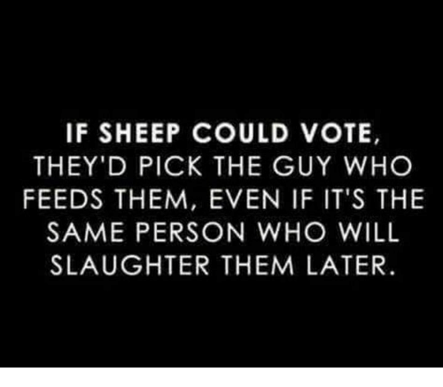 Memes, 🤖, and Who: IF SHEEP COULD VOTE,  THEY'D PICK THE GUY WHO  FEEDS THEM, EVEN IF IT'S THE  SAME PERSON WHO WILL  SLAUGHTER THEM LATER.
