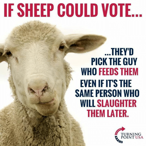 Turning Point Usa: IF SHEEP COULD VOTE  THEYD  PICK THE GUY  WHO FEEDS THEM  EVEN IF IT'S THE  SAME PERSON WHO  WILL SLAUGHTER  THEM LATER.  TURNING  POINT USA