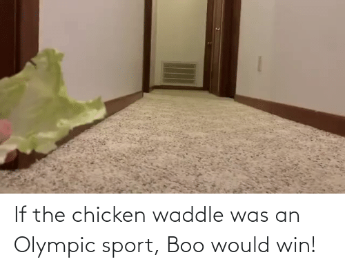 olympic: If the chicken waddle was an Olympic sport, Boo would win!