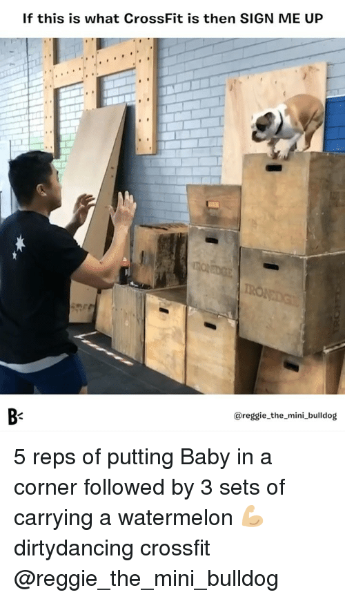 Sign Me Up: If this is what CrossFit is then SIGN ME UP  B-  @reggie_the_mini_bulldog 5 reps of putting Baby in a corner followed by 3 sets of carrying a watermelon 💪🏼 dirtydancing crossfit @reggie_the_mini_bulldog