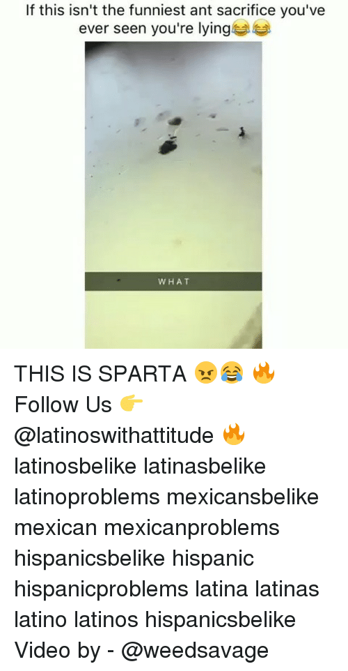 Sparta: If this isn't the funniest ant sacrifice you've  ever seen you're lying  WHAT THIS IS SPARTA 😠😂 🔥 Follow Us 👉 @latinoswithattitude 🔥 latinosbelike latinasbelike latinoproblems mexicansbelike mexican mexicanproblems hispanicsbelike hispanic hispanicproblems latina latinas latino latinos hispanicsbelike Video by - @weedsavage