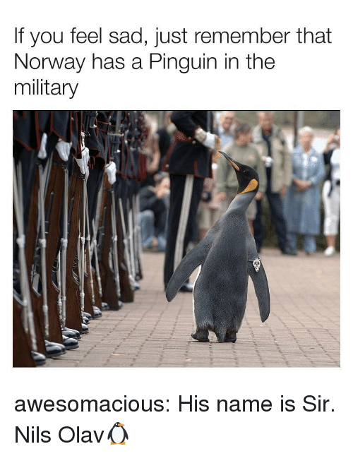 Tumblr, Blog, and Http: If you feel sad, just remember that  Norway has a Pinguin in the  military awesomacious:  His name is Sir. Nils Olav🐧