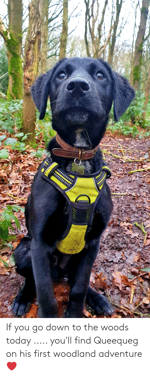 Down To: If you go down to the woods today ..... you'll find Queequeg on his first woodland adventure ❤