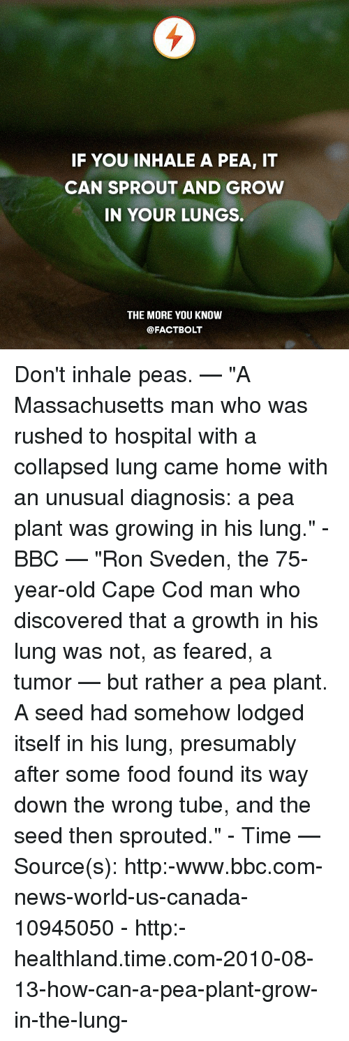 "Food, Memes, and News: IF YOU INHALE A PEA, IT  CAN SPROUT AND GROW  IN YOUR LUNGS.  THE MORE YOU KNOW  @FACT BOLT Don't inhale peas. — ""A Massachusetts man who was rushed to hospital with a collapsed lung came home with an unusual diagnosis: a pea plant was growing in his lung."" - BBC — ""Ron Sveden, the 75-year-old Cape Cod man who discovered that a growth in his lung was not, as feared, a tumor — but rather a pea plant. A seed had somehow lodged itself in his lung, presumably after some food found its way down the wrong tube, and the seed then sprouted."" - Time — Source(s): http:-www.bbc.com-news-world-us-canada-10945050 - http:-healthland.time.com-2010-08-13-how-can-a-pea-plant-grow-in-the-lung-"