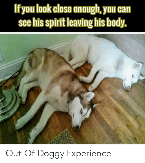 doggy: If you look close enough, you can  see his spirit leaving his body. Out Of Doggy Experience