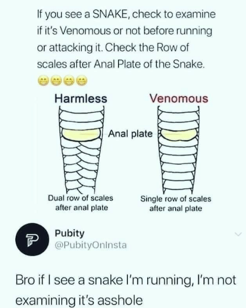 Row: If you see a SNAKE, check to examine  if it's Venomous or not before running  or attacking it. Check the Row of  scales after Anal Plate of the Snake.  Venomous  Harmless  Anal plate  Dual row of scales  after anal plate  Single row of scales  after anal plate  Pubity  @PubityOninsta  Bro if I see a snake l'm running, I'm not  examining it's asshole