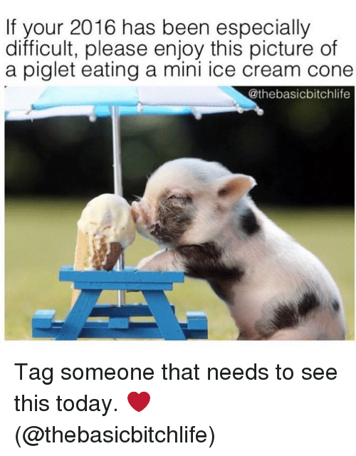 Memes, Ice Cream, and Tag Someone: If your 2016 has been especially  difficult, please enjoy this picture of  a piglet eating a mini ice cream cone  Cathebasicbitchlife Tag someone that needs to see this today. ❤️ (@thebasicbitchlife)