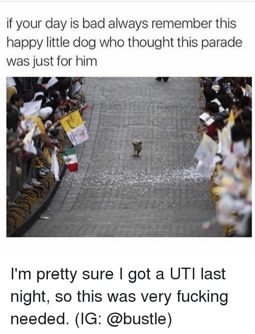 uti: if your day is bad always remember this  happy little dog who thought this paradee  was just for him I'm pretty sure I got a UTI last night, so this was very fucking needed. (IG: @bustle)
