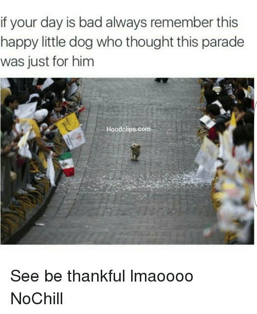 Littled: if your day is bad always remember this  happy little dog who thought this parade  was just for him  Hood clips.com See be thankful lmaoooo NoChill