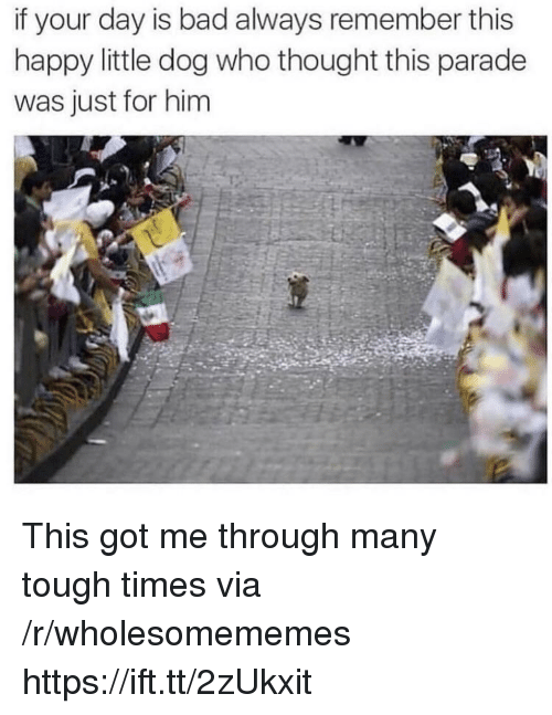 Bad, Happy, and Tough: if your day is bad always remember this  happy little dog who thought this parade  was just for him This got me through many tough times via /r/wholesomememes https://ift.tt/2zUkxit