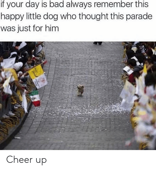 Bad, Happy, and Thought: if your day is bad always remember this  happy little dog who thought this parade  was just for him Cheer up
