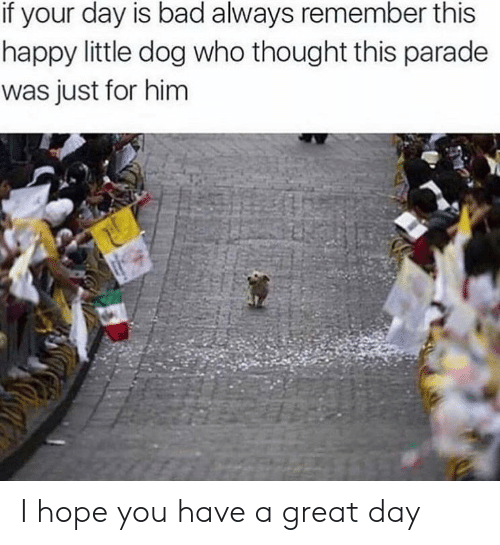 Bad, Happy, and Hope: if your day is bad always remember this  happy little dog who thought this parade  was just for him I hope you have a great day