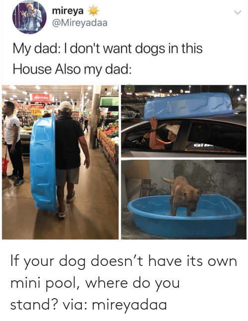 Dog: If your dog doesn't have its own mini pool, where do you stand? via: mireyadaa