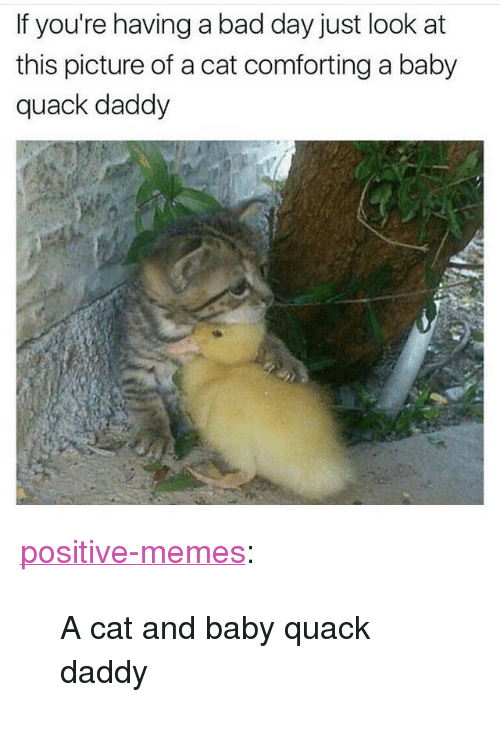 """Look At This Picture: If you're having a bad day just look at  this picture of a cat comforting a baby  quack daddy <p><a href=""""https://positive-memes.tumblr.com/post/166325475940/a-cat-and-baby-quack-daddy"""" class=""""tumblr_blog"""">positive-memes</a>:</p>  <blockquote><p>A cat and baby quack daddy</p></blockquote>"""