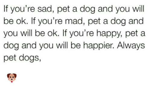 Dank, Dogs, and Happy: If you're sad, pet a dog and you will  be ok. If you're mad, pet a dog and  you will be ok. If you're happy, pet a  dog and you will be happier. Always  pet dogs, 🐶