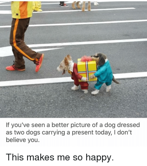 Dont Believe You: If you've seen a better picture of a dog dressed  as two dogs carrying a present today, I don't  believe you This makes me so happy.